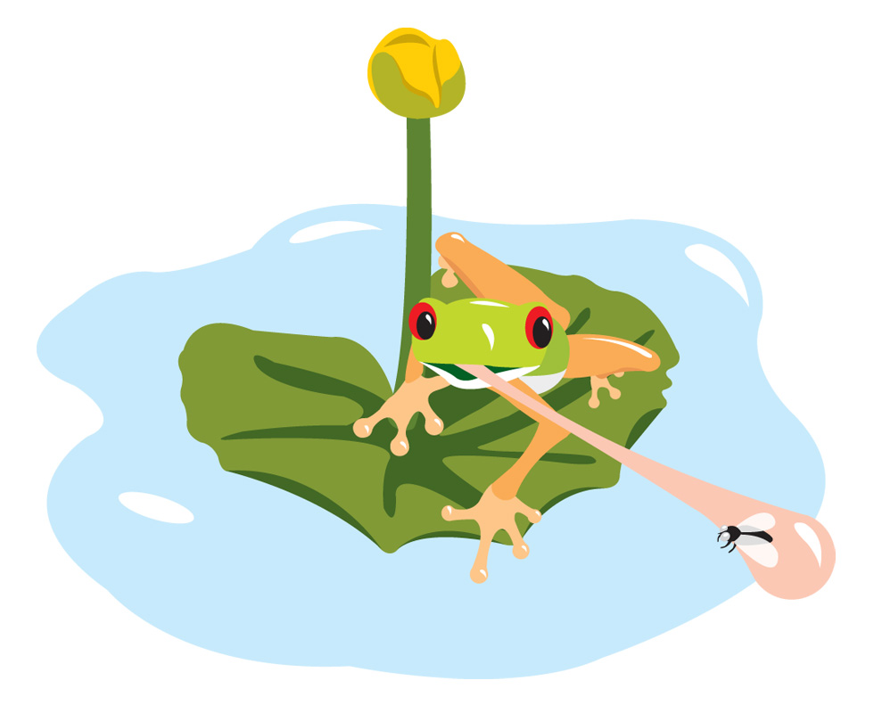 Frog vector illustration logo.